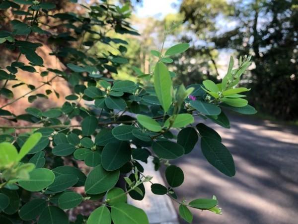 散歩道の枝
